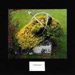 13/1 - Ambushed - John Lester