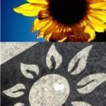 Sunflower inspiration for DIHELION sundial shapes